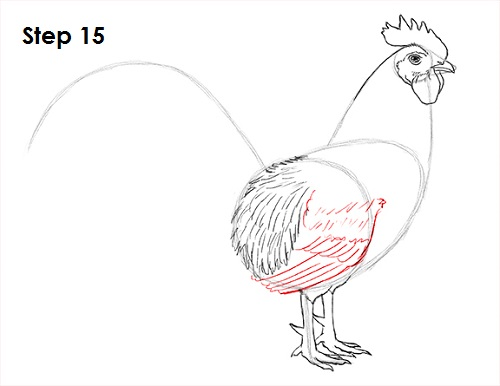 Draw Rooster 15