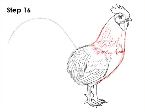 Draw Rooster 16