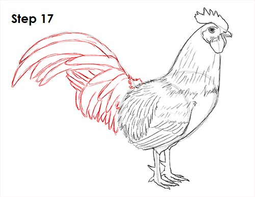 Draw Rooster 17