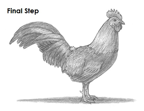Draw Rooster Last