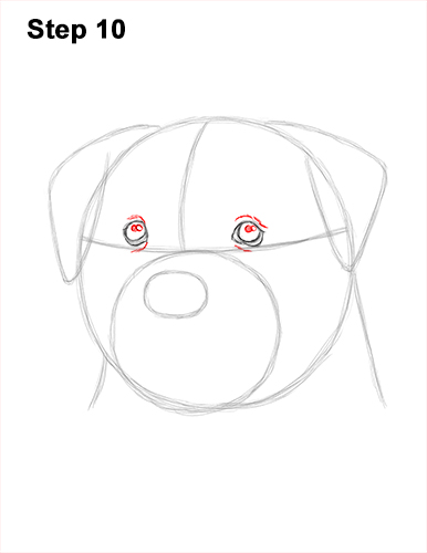 How to Draw a Rottweiler Dog Head Portrait Face 10