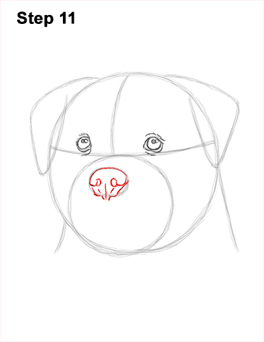 How to Draw a Rottweiler Dog Head Portrait Face 11