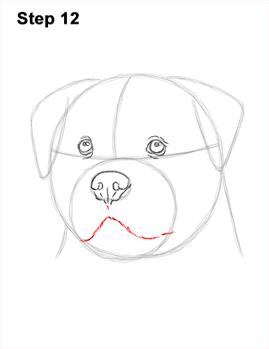 How to Draw a Rottweiler Dog Head Portrait Face 12
