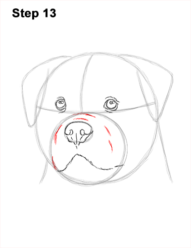 How to Draw a Rottweiler Dog Head Portrait Face 13