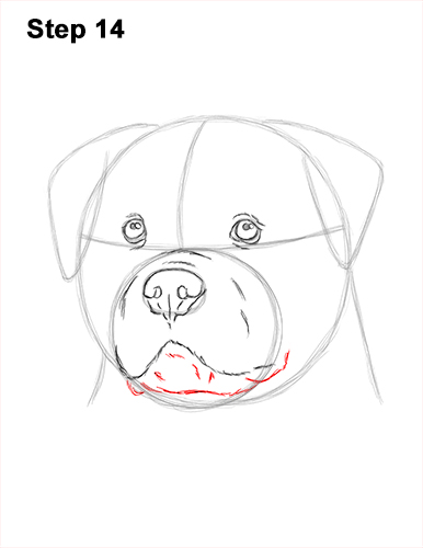 How to Draw a Rottweiler Dog Head Portrait Face 14