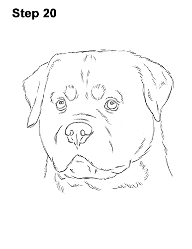 How to Draw a Rottweiler Dog Head Portrait Face 20