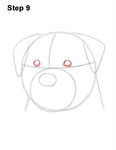 How to Draw a Rottweiler Dog Head Portrait Face 9