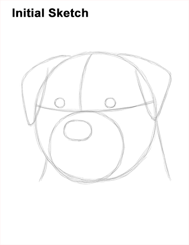 How to Draw a Rottweiler Dog Head Portrait Face Guide Lines