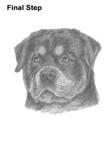 How to Draw a Rottweiler Dog Head Portrait Face