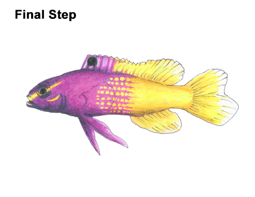 How to Draw a Royal Gramma Fairy Basslet Fish