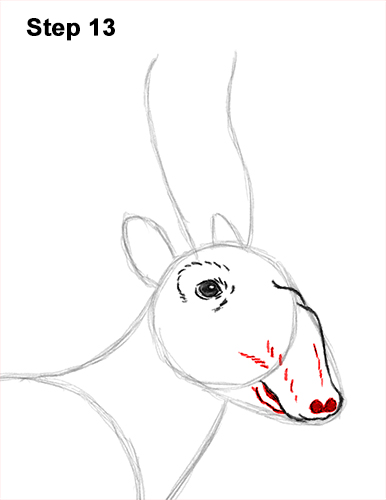 How to Draw a Male Saiga Antelope 13