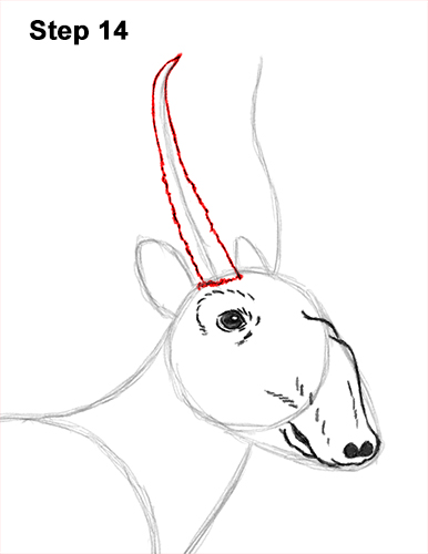 How to Draw a Male Saiga Antelope 14