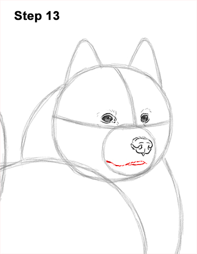 How to Draw a White Samoyed Puppy Dog 13