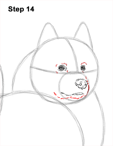 How to Draw a White Samoyed Puppy Dog 14
