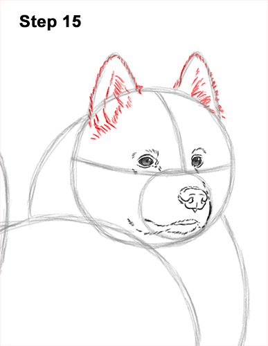 How to Draw a White Samoyed Puppy Dog 15