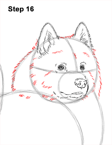 How to Draw a White Samoyed Puppy Dog 16