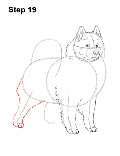 How to Draw a White Samoyed Puppy Dog 19