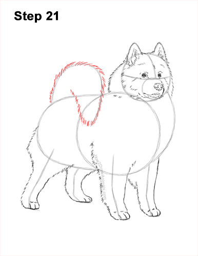 How to Draw a White Samoyed Puppy Dog 21