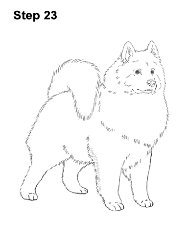 How to Draw a White Samoyed Puppy Dog 23