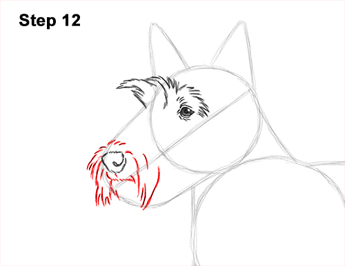 How to Draw a Scottish Terrier Puppy Dog Side 12