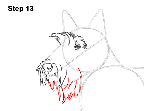 How to Draw a Scottish Terrier Puppy Dog Side 13