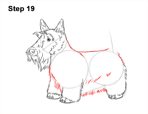 How to Draw a Scottish Terrier Puppy Dog Side 19