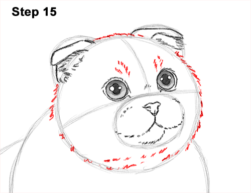 How to Draw a Scottish Fold Cat Playing Pawing Swiping 15