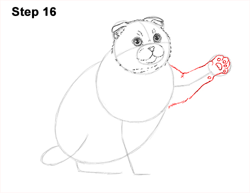 How to Draw a Scottish Fold Cat Playing Pawing Swiping 16