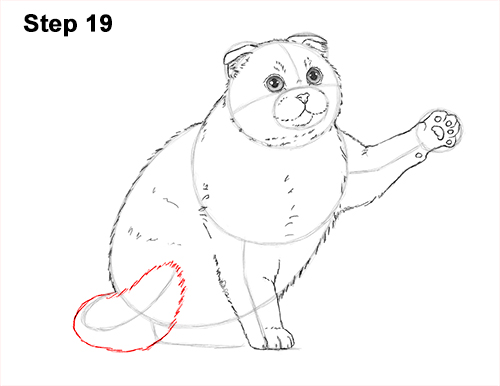 How to Draw a Scottish Fold Cat Playing Pawing Swiping 19