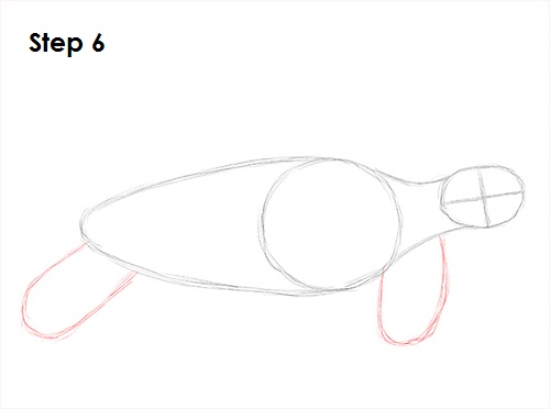 Draw Sea Turtle 6