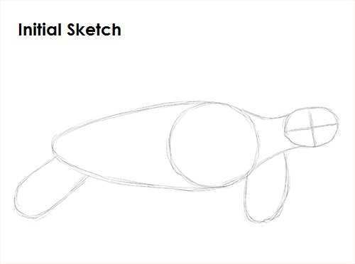 Draw Sea Turtle Sketch