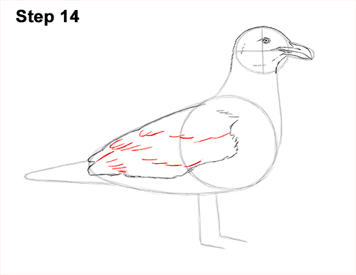 How to Draw a Seagull Gull Bird Standing 14