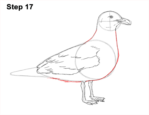 How to Draw a Seagull Gull Bird Standing 17