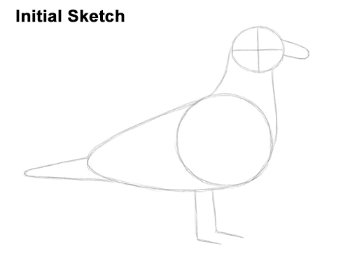 How to Draw a Seagull Gull Bird Standing Initial Sketch
