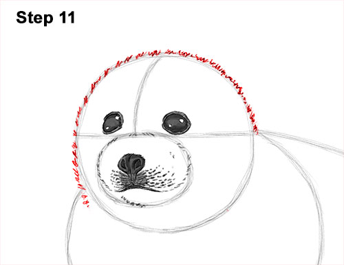 How to Draw a Fluffy Cute Baby Harp Seal Pup 11