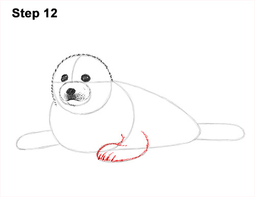 How to Draw a Fluffy Cute Baby Harp Seal Pup 12