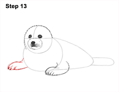 How to Draw a Fluffy Cute Baby Harp Seal Pup 13
