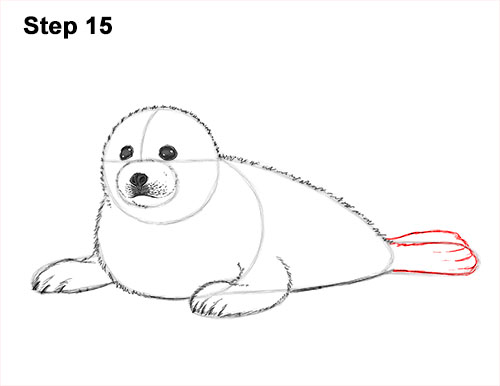 How to Draw a Fluffy Cute Baby Harp Seal Pup 15