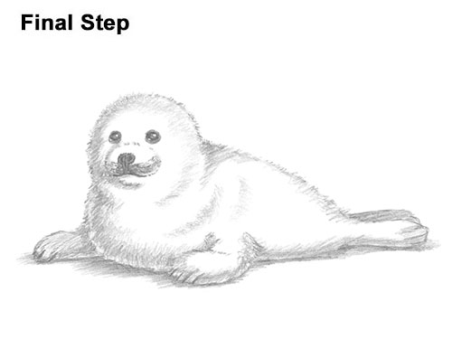 How to Draw a Fluffy Cute Baby Harp Seal Pup