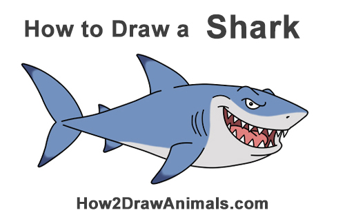 How To Draw A Shark Cartoon Video Step By Step Pictures