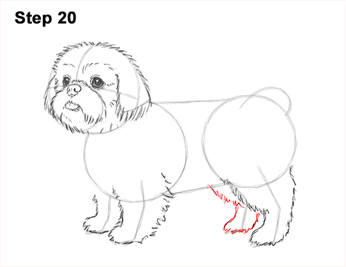 How to Draw a Cute Shih Tzu Puppy Dog 20