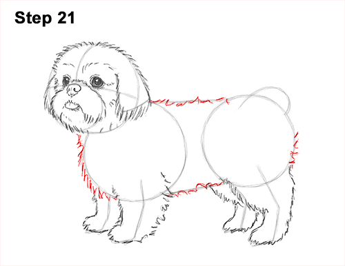 How to Draw a Cute Shih Tzu Puppy Dog 21
