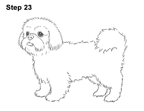 How to Draw a Cute Shih Tzu Puppy Dog 23