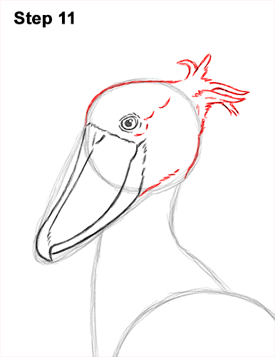 How to Draw a Shoebill Whale-headed Stork Bird 11