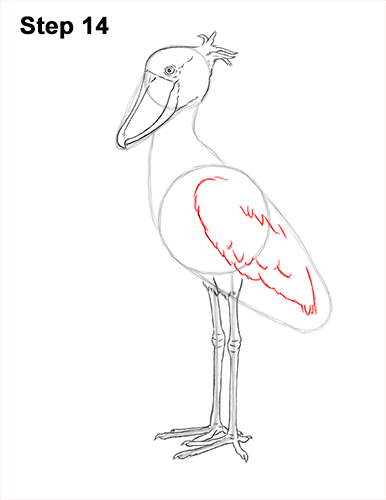 How to Draw a Shoebill Whale-headed Stork Bird 14