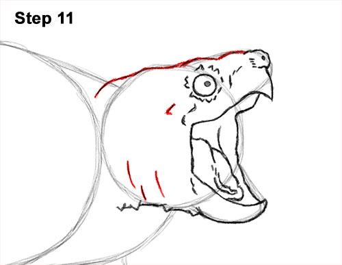 How to Draw Alligator Snapping Turtle Snapper 11