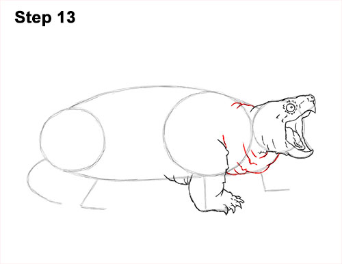 How to Draw Alligator Snapping Turtle Snapper 13