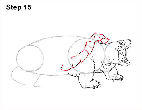 How to Draw Alligator Snapping Turtle Snapper 15