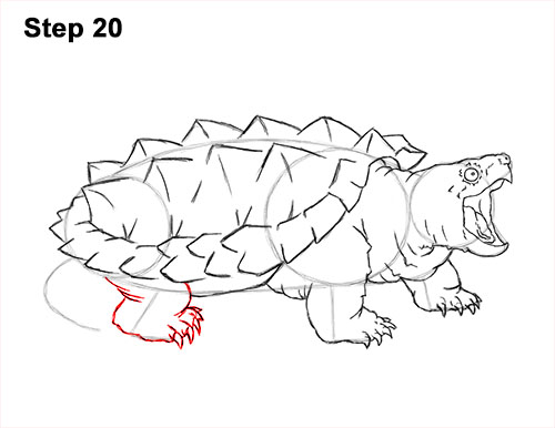 How to Draw Alligator Snapping Turtle Snapper 20