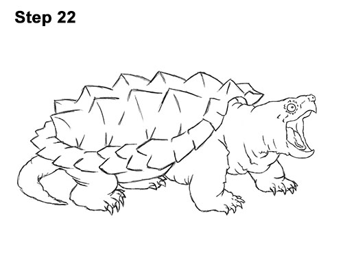How to Draw Alligator Snapping Turtle Snapper 22